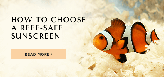 BLOG: Is Your Sunscreen Killing Coral? Here's How to Choose a Reef-Safe Sunscreen | Badger