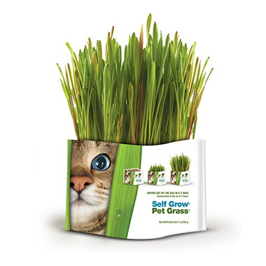 Pet Greens Medley Self Grow Garden Kit