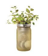 Modern Sprout Garden Jar Oregano