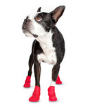 Wellies Boots for Dogs Medium in Red