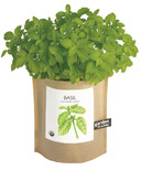 Potting Shed Creations Basil Garden-in-a-Bag