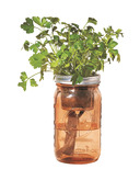 Modern Sprout Garden Jar Parsley