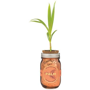 Modern Sprout Garden Jar Palm Pint