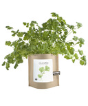 Potting Shed Creations Cilantro Garden-in-a-Bag