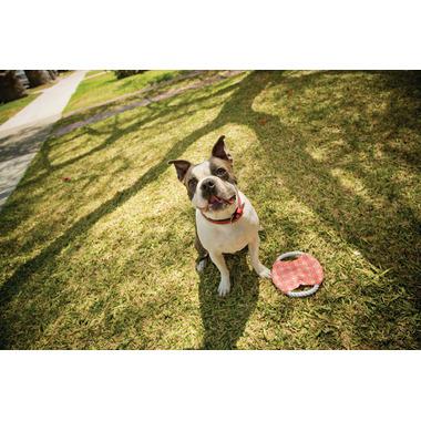 Ore Pet Tug & Fetch Pet Toy
