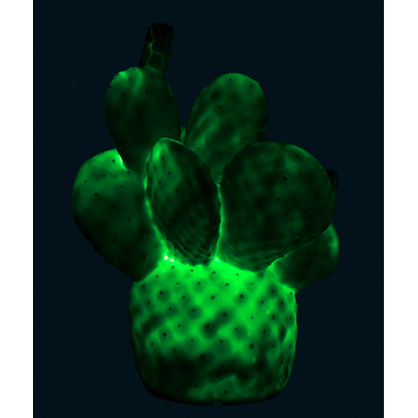 Goodnight Light Cactus Lamp Emerald