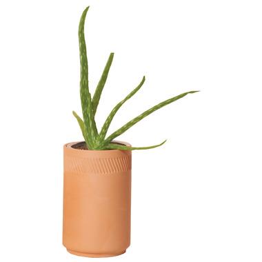 Modern Sprout Terracotta Kit Aloe