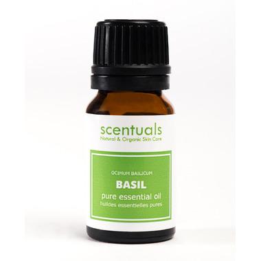 Scentuals Pure Essential Oil Sweet Basil (Ocimum Basilicum)