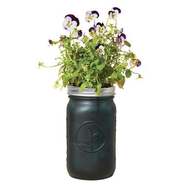 Modern Sprout Garden Jar Pansy