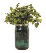 Modern Sprout Garden Jar Cilantro
