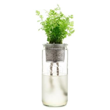 Modern Sprout Eco Planter Cilantro