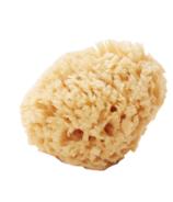 Well Kept Wool Sea Sponge Medium