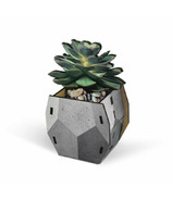 Fred Pop Plants Desk Caddy Echeveria