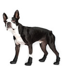 Wellies Boots for Dogs Medium in Black