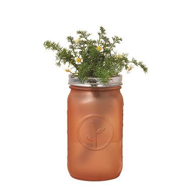 Modern Sprout Garden Jar Chamomile