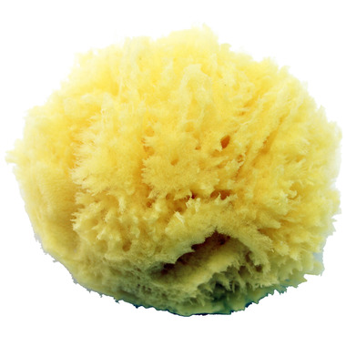 Axel Kraft Natural Sea Sponge