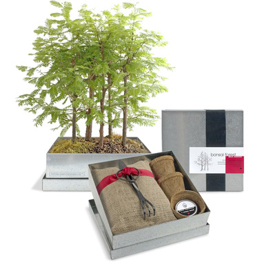 Potting Shed Creations Dawn Redwood Forest Bonsai Box