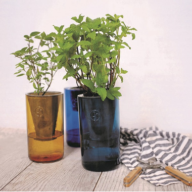 Modern Sprout Gen Basil & Parsley Tumbler