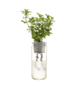 Modern Sprout Eco Planter Mint