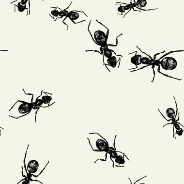 Elise Picnic Beverage Napkin Ants