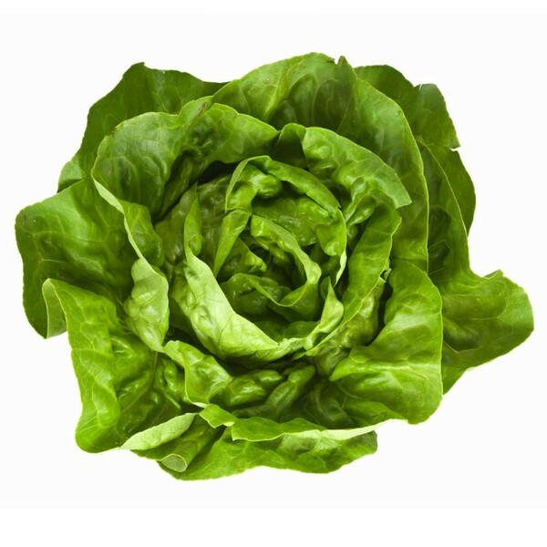 Lettuce - Boston - Hydroponic