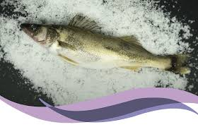 Pickerel Fillet - Frozen