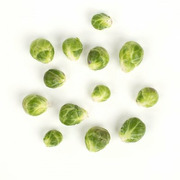 Sprout - Brussel