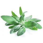 Sage - Organic