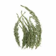 Rosemary - Organic