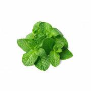 Mint - Organic