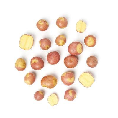"Potato Red Creamer ""C"""