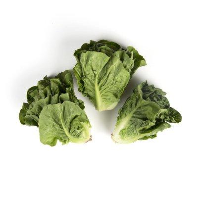 Lettuce - Little Gem