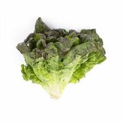 Lettuce Red Leaf